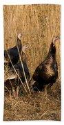 Eastern Wild Turkeys Beach Towel