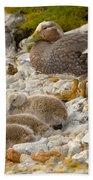 Falkland Steamerduck Beach Towel