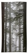 Foggy Coast Redwood Forest Beach Towel