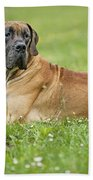 Great Dane Beach Towel