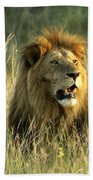 King Of The Savanna Beach Towel
