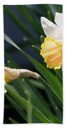 Large-cupped Daffodil Named Mrs. R.o. Backhouse Beach Towel
