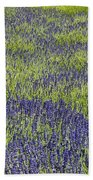 Lavendar Field Rows Of White And Purple Flowers Beach Towel