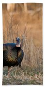 Male Eastern Wild Turkey Beach Towel