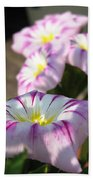 Morning Glory Named Pink Ensign Beach Towel