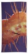 Neisseria Gonorrhoeae Bacteria Beach Towel