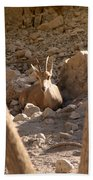 Nubian Ibex Beach Towel