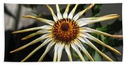 Osteospermum Named African Moon Beach Towel