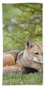 Patagonian Red Fox Beach Towel