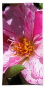 Portulaca Named Sundial Peppermint Beach Towel