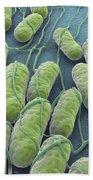 Salmonella Bacteria Beach Towel