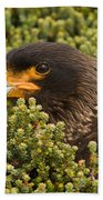 Striated Caracara Beach Towel
