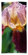 Tall Bearded Iris Named Indian Chief Beach Towel