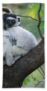Verreauxs Sifakas Cuddling Beach Towel