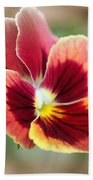 Viola Named Penny Red Blotch Beach Towel