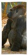 Western Lowland Gorilla Male Beach Towel