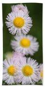 Wildflower Named Robin's Plantain Beach Towel