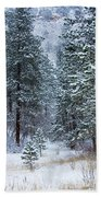 Winter In Pike National Forest Beach Towel