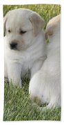 Yellow Labrador Puppy Beach Towel by Linda Freshwaters Arndt