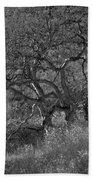 50 Shades Of Gray Trees Beach Towel