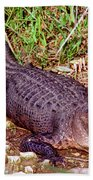 American Alligator Beach Towel