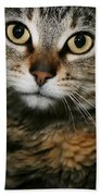 Brown Tabby Beach Towel