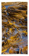 Bull Kelp Blades On Surface Background Texture Beach Towel
