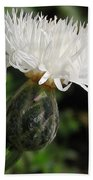 Centaurea Named The Bride Beach Towel