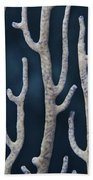 Coral Design Beach Towel by Jean Noren