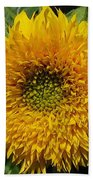 Dwarf Sunflower Named Teddy Bear Beach Towel