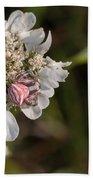Flower Crab Spider Beach Towel