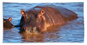 Hippopotamus In River. Serengeti. Tanzania Beach Towel