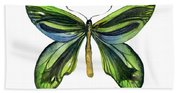 6 Queen Alexandra Butterfly Beach Towel