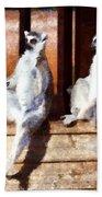 Ring Tailed Lemurs Beach Towel