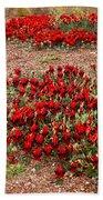 Sturt's Desert Pea Outback South Australia Beach Towel