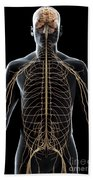 The Nerves Of The Upper Body Beach Towel
