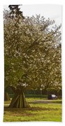 Tree With Large White Flowers Beach Towel