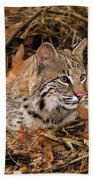 611000006 Bobcat Felis Rufus Wildlife Rescue Beach Towel