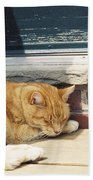 #665 03 Catnap  Beach Sheet