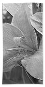 Dwarf Canna Lily Named Corsica Beach Towel