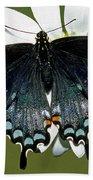 Eastern Black Swallowtail Beach Towel