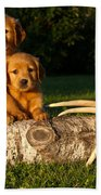 Golden Retriever Puppies Beach Sheet
