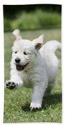 Golden Retriever Puppy Beach Towel by John Daniels
