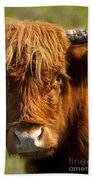 Highland Cow Beach Towel by Brian Jannsen