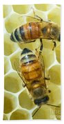 Honey Bees In Hive Beach Towel