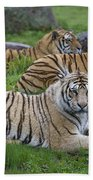 Siberian Tigers, China Beach Towel