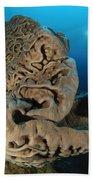 The Salvador Dali Sponge With Intricate Beach Towel