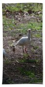 White Ibis Beach Towel