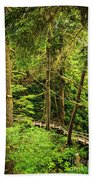 Path In Temperate Rainforest Beach Towel by Elena Elisseeva