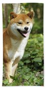 Shiba Inu Dog Beach Towel